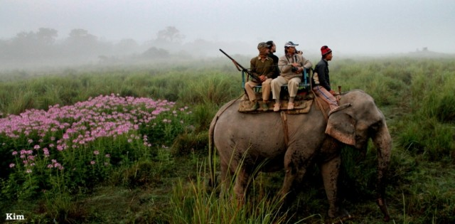 Kaziranga National Park 276
