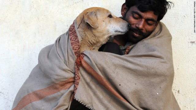 150713120412-india-stray-dogs-6-exlarge-169