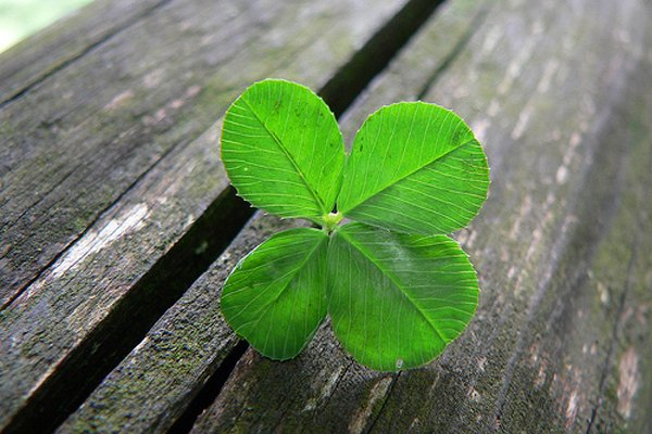 four_leaf_clover_001