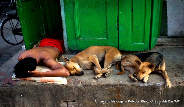 Homeless-Indian-man-and-stray-dogs-Nov-1