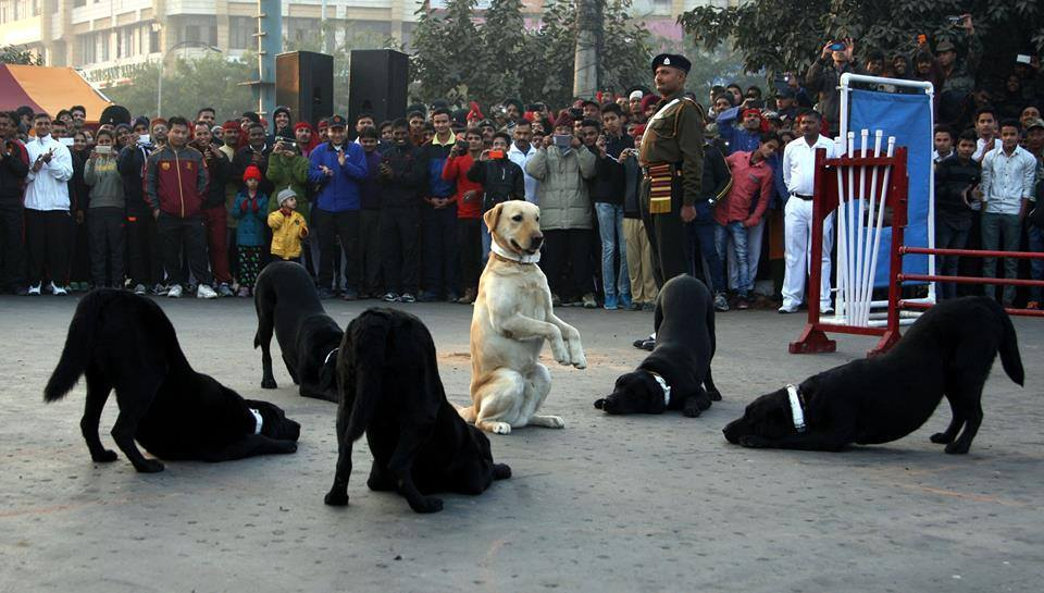 Indian-army-dogs