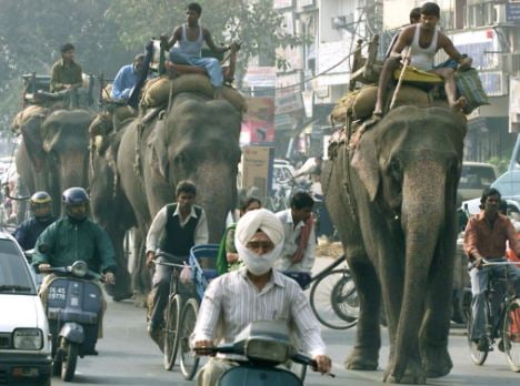 ELEPHANTS WALK WITH THEIR MASTERS ON A BUSY ROAD IN SOUTH DELHI