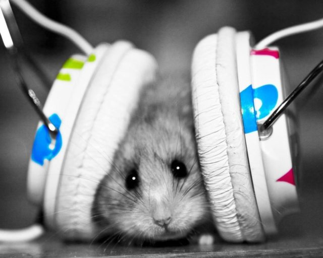 funny-mouse-having-big-headphones-to-listen-music-funny-mouse-pix-2015