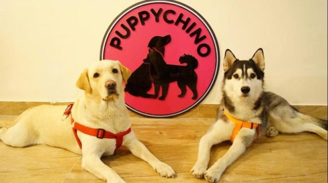 The Puppychino Café.