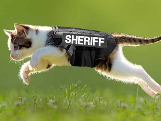 Washington County Cat Patrol