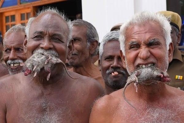 Tamil Nadu farmers eat rats as protest