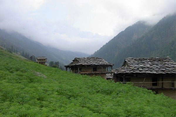 Malana Village, Parvati Valley