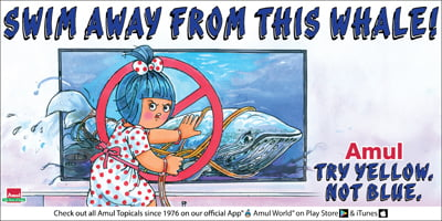 Amul - Swim away from this whale!
