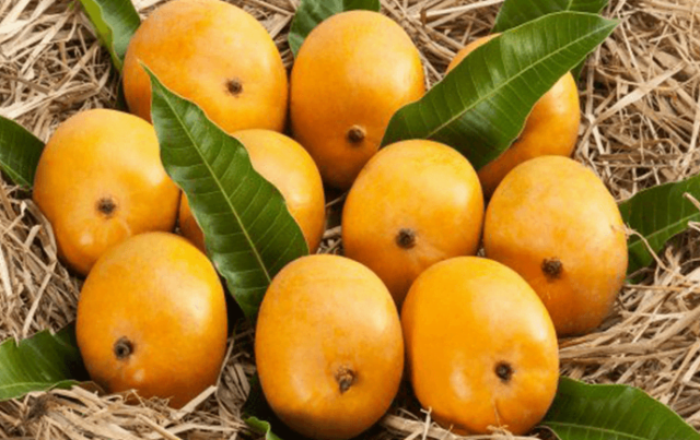 The Guardians of Alphonso Mangoes