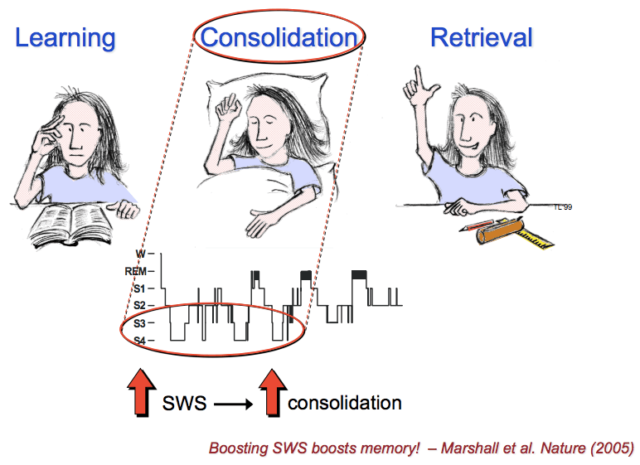 Learning-Consolidation-Retrieval