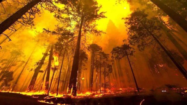 Uttarakhand Wildfires
