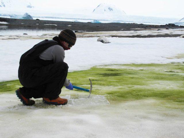 antartica green