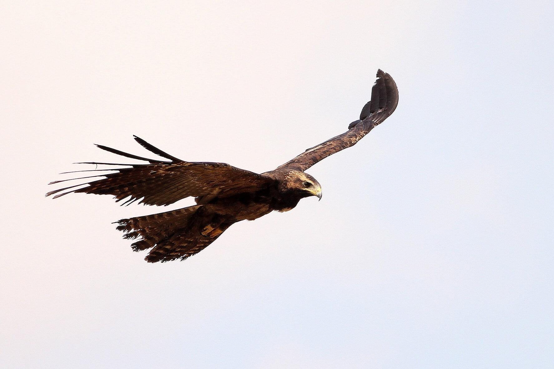Eagles Hawks In Bangalore